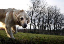 honden loslopen arnhem