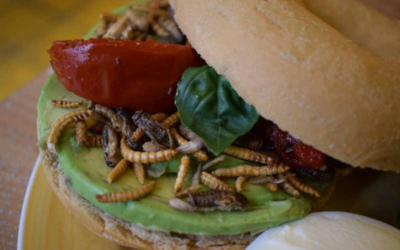 Bugs Bagel