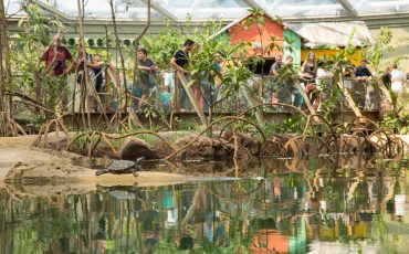 burgers zoo mangrove