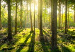 bos den bosch