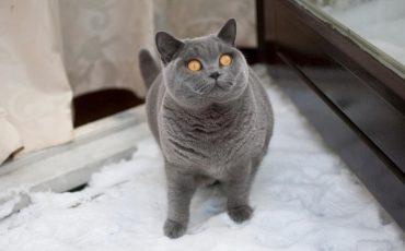 Deedee indebuurt kat
