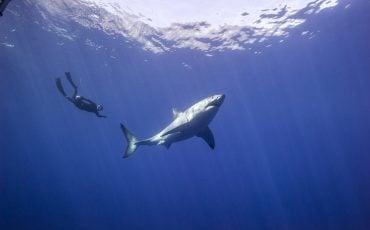 film Omniversum Great White Shark