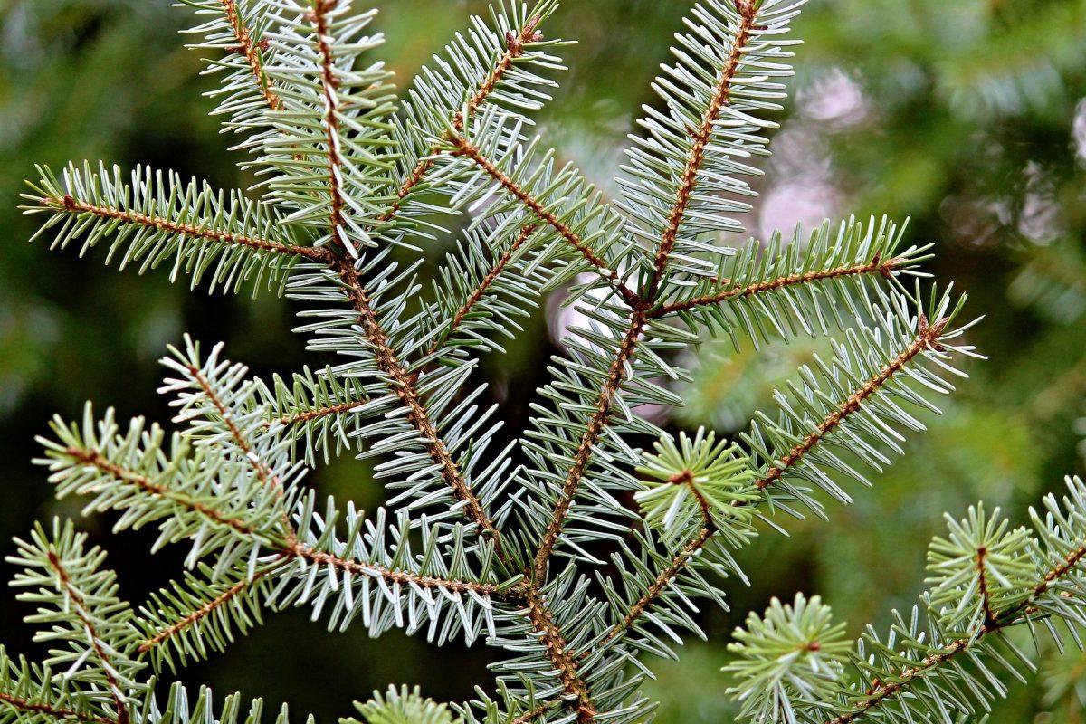 9 X Hier Scoor Je Nu Een Echte Kerstboom In Arnhem