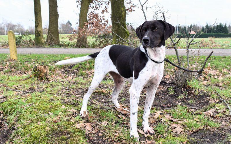 Hond Gwen dierenasiel