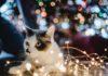 kerstboom aan gort raggen