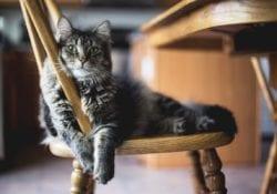 Kattencafé dierendag Gouda