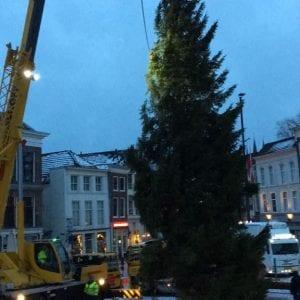 kerstboom-gouda