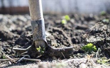 Regels huisdier begraven in je eigen tuin in Gouda