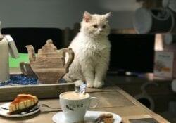 Brokken&Zo XXL Kattencafé