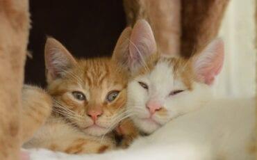 kittens gouda