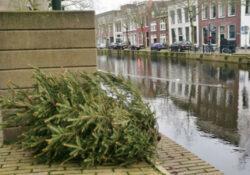 kerstboom gouda