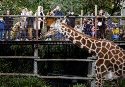 ANP-dierentuin