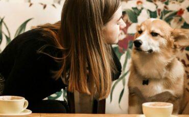 hondvriendelijke restaurants