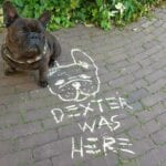 dexter was here