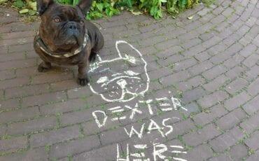 dexter was here