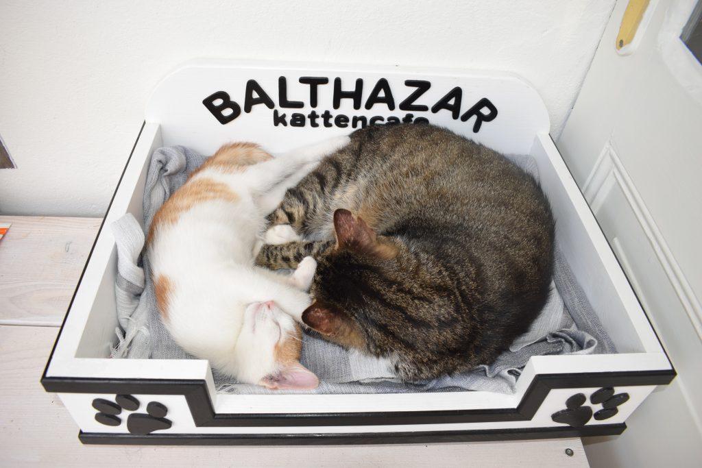 Kattencafé Balthazar