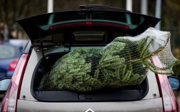 kerstboom thuisbezorgen