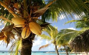 Eiland tropisch palmboom