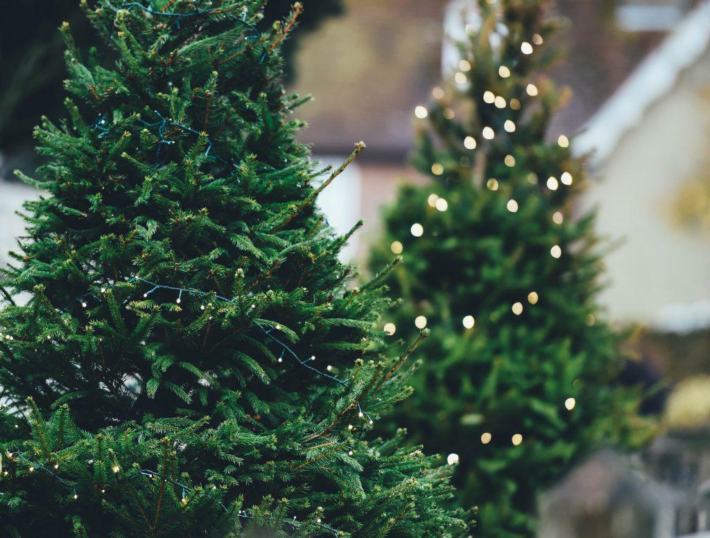 kerstboom kopen in Utrecht