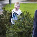 Kerstbomen inzamelen