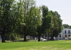 Bomen Exercitieveld Kap kastanjebomen Woerden