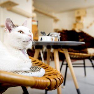 kattencafe-zwolle